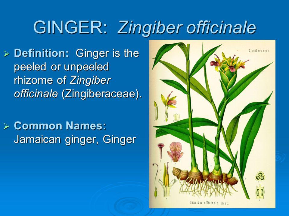 GINGER: Zingiber officinale