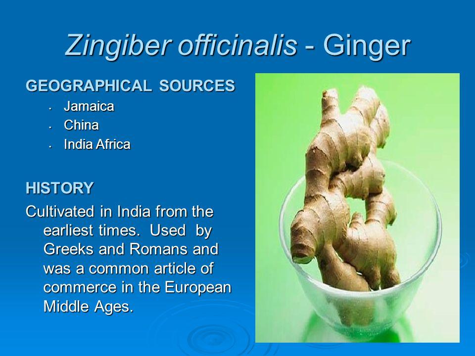 Zingiber officinalis - Ginger