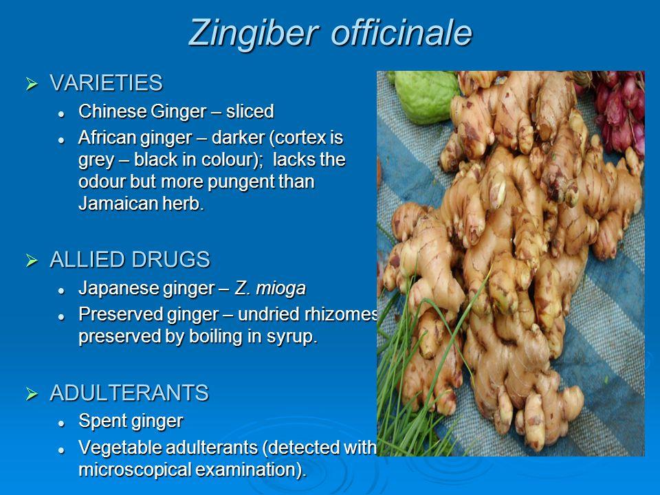 Zingiber officinale VARIETIES ALLIED DRUGS ADULTERANTS