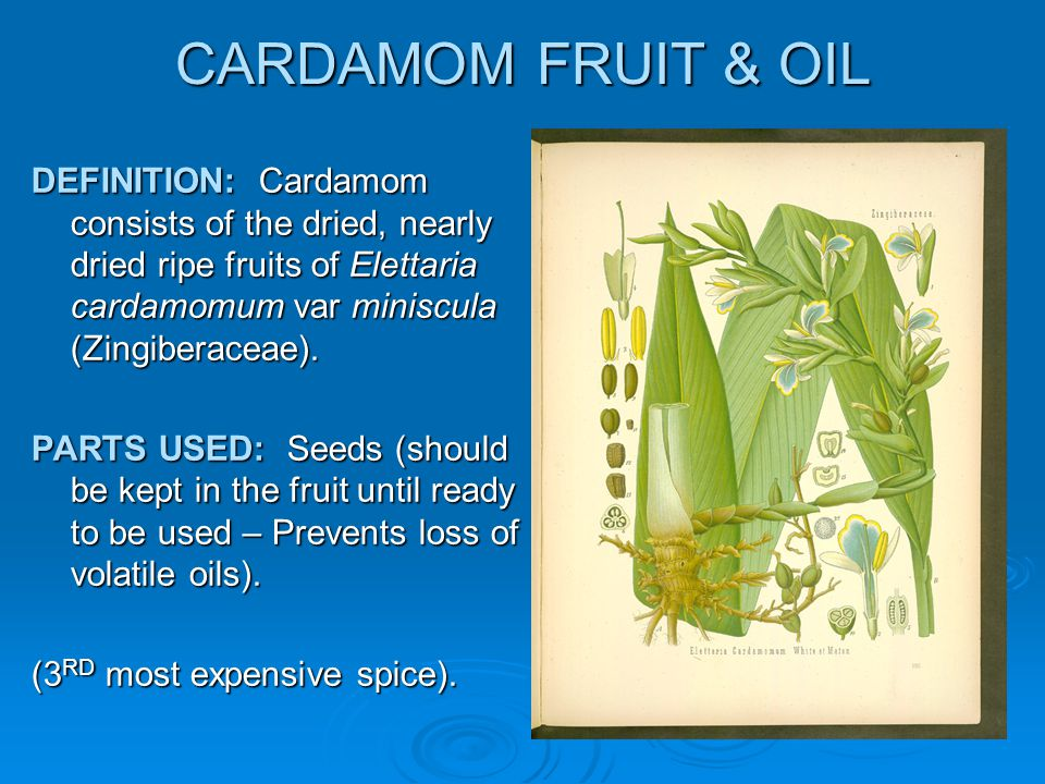 CARDAMOM FRUIT & OIL DEFINITION: Cardamom consists of the dried, nearly dried ripe fruits of Elettaria cardamomum var miniscula (Zingiberaceae).