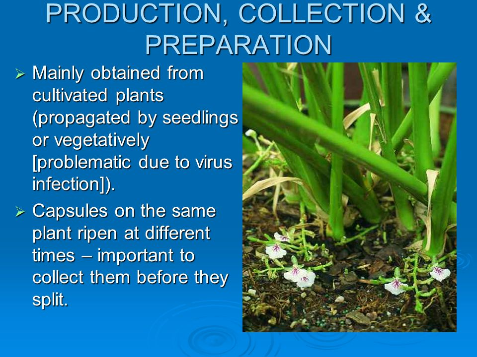 PRODUCTION, COLLECTION & PREPARATION
