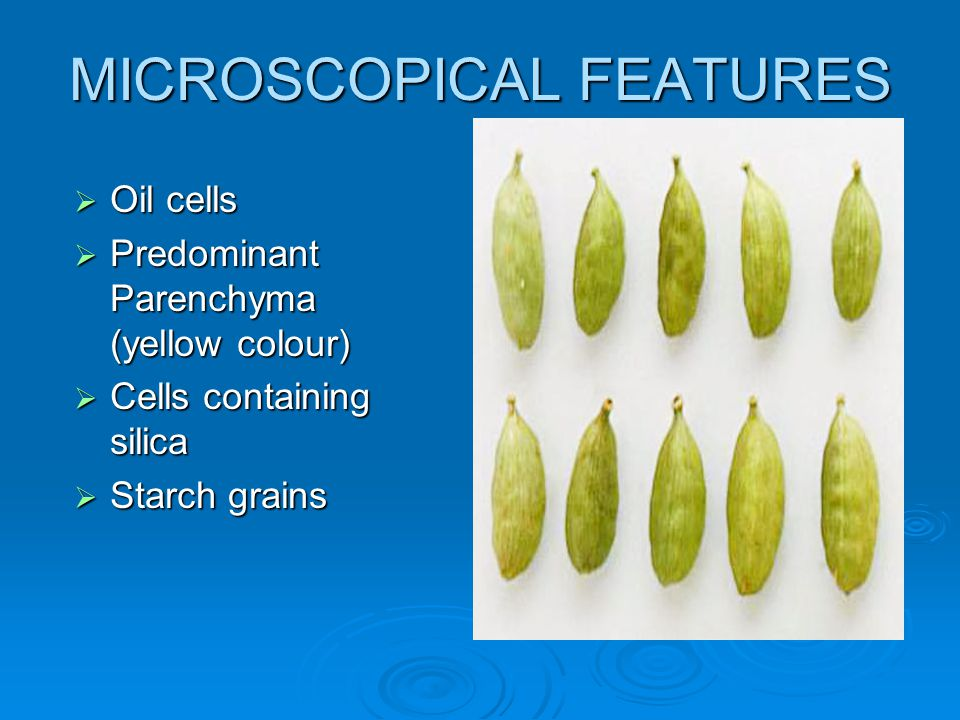 MICROSCOPICAL FEATURES