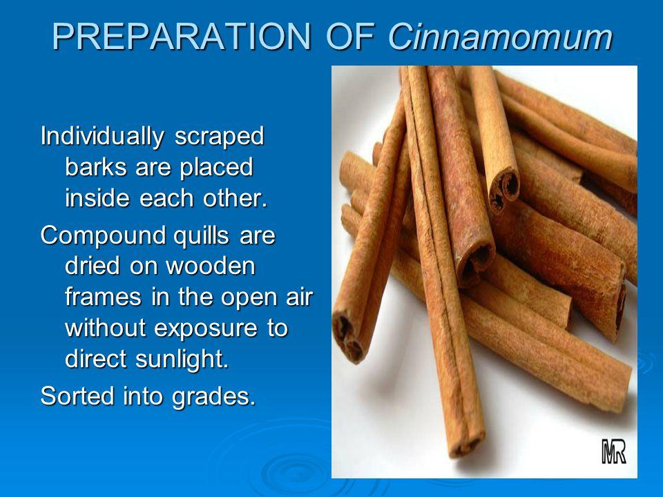 PREPARATION OF Cinnamomum