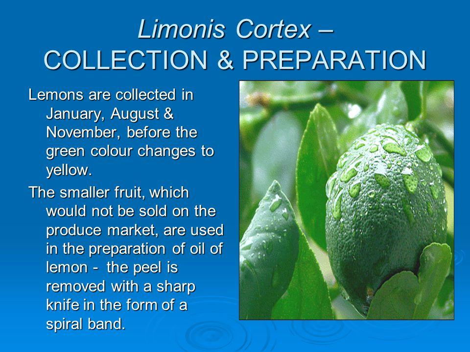 Limonis Cortex – COLLECTION & PREPARATION