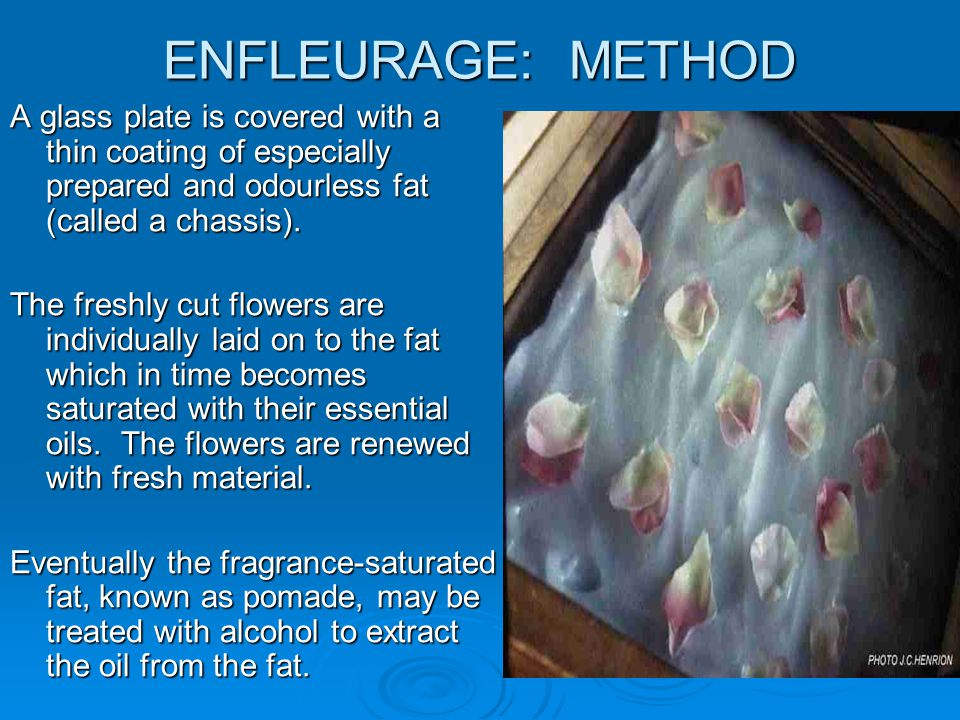 ENFLEURAGE: METHOD A glass plate is covered with a thin coating of especially prepared and odourless fat (called a chassis).