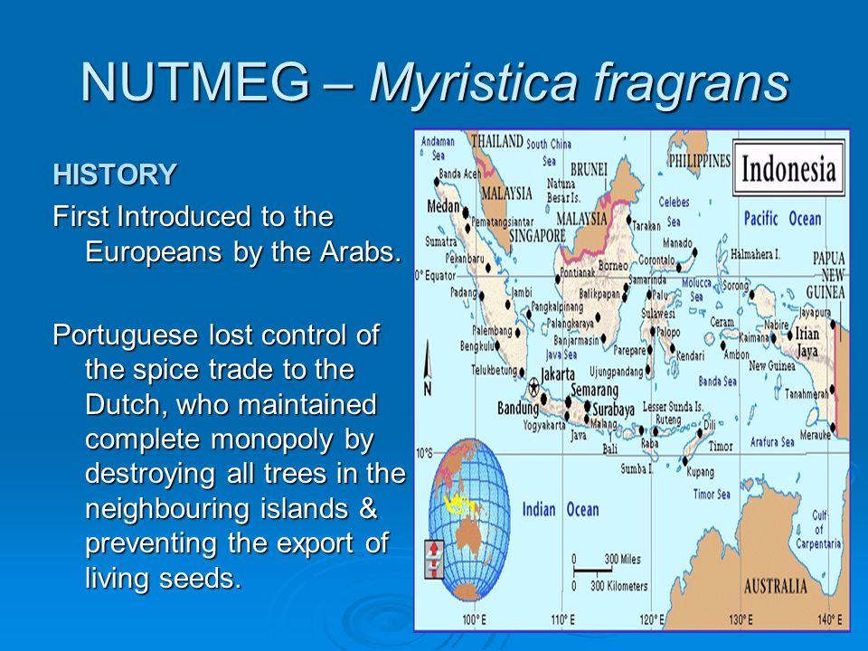NUTMEG – Myristica fragrans