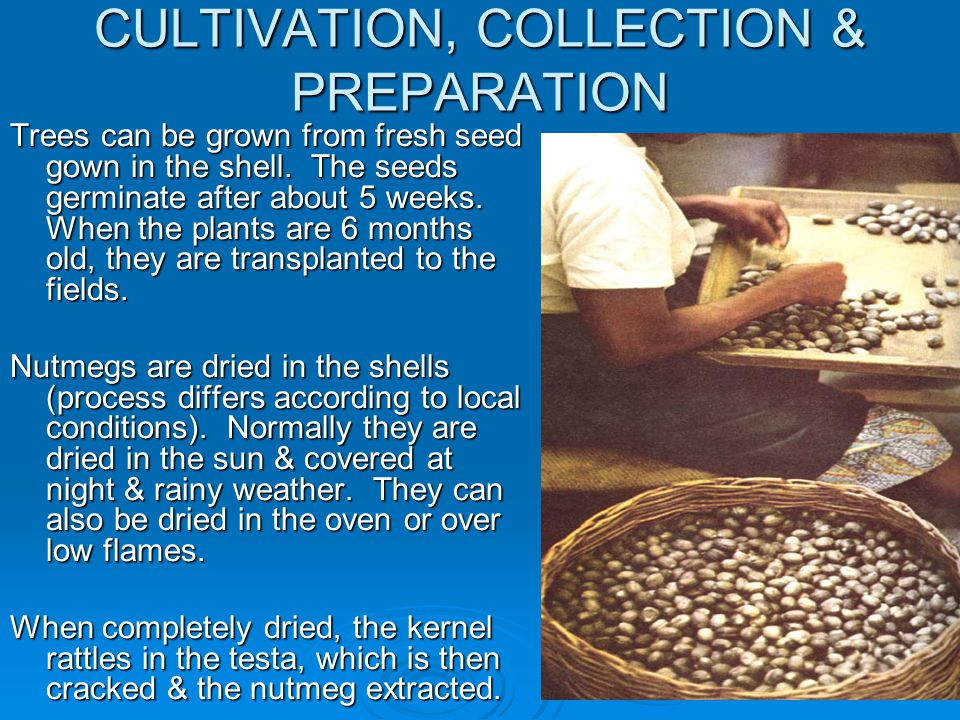CULTIVATION, COLLECTION & PREPARATION
