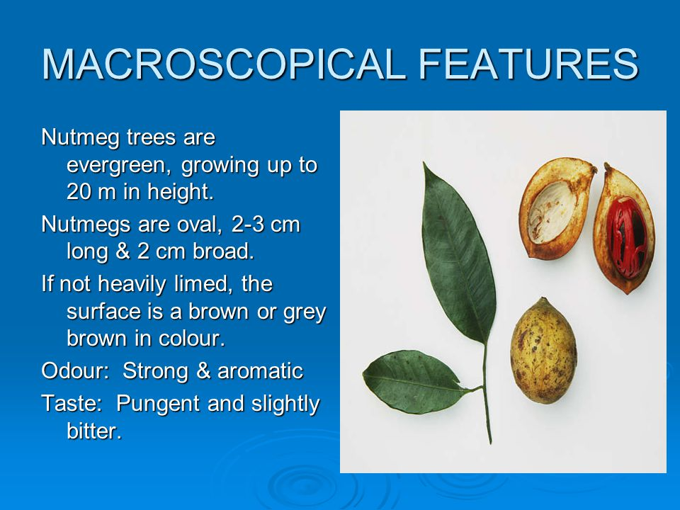 MACROSCOPICAL FEATURES