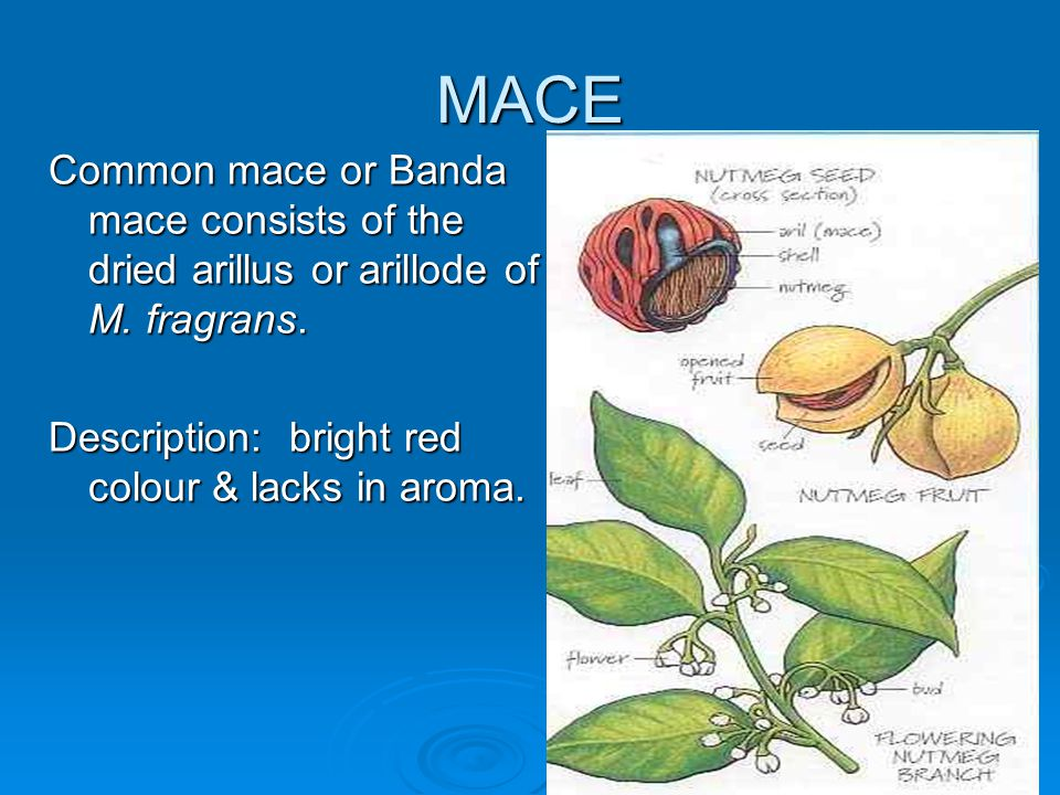 MACE Common mace or Banda mace consists of the dried arillus or arillode of M.