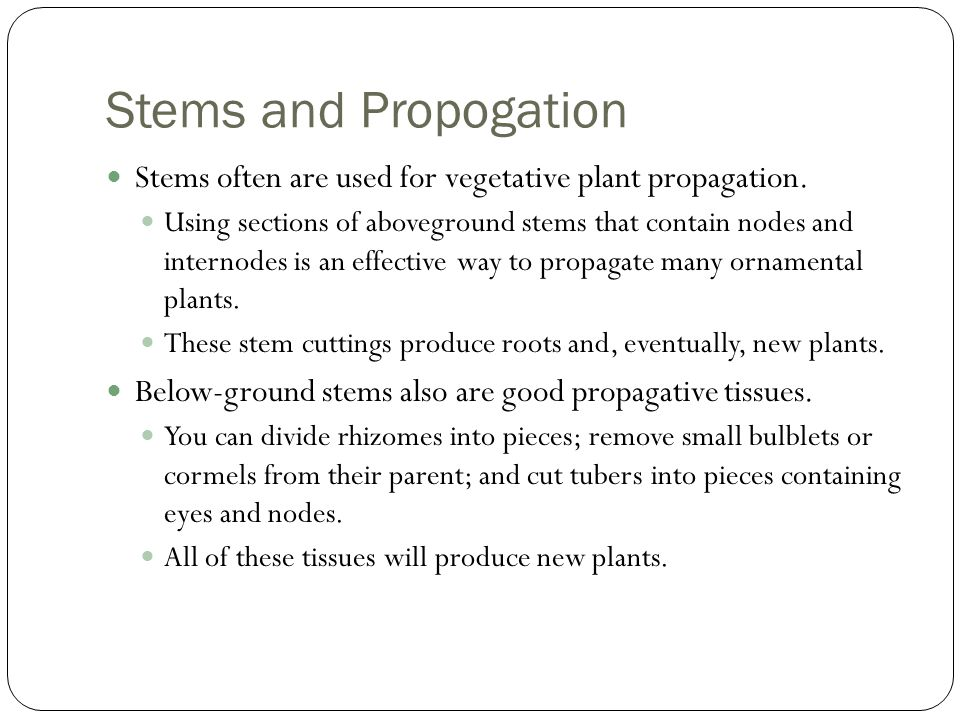 Stems and Propogation Stems often are used for vegetative plant propagation.