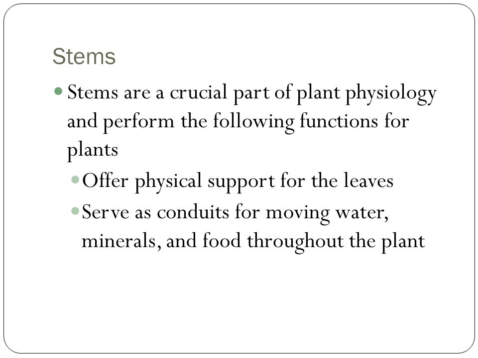 Stems Stems are a crucial part of plant physiology and perform the following functions for plants.