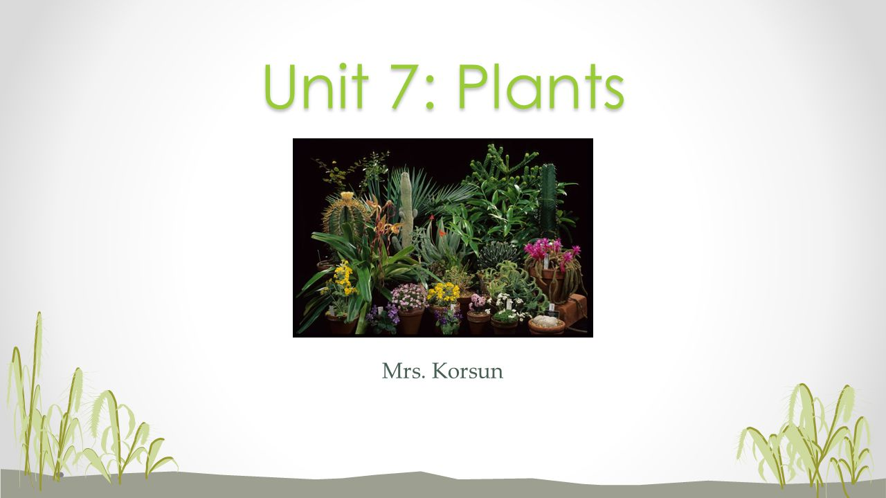 Unit 7: Plants Mrs. Korsun