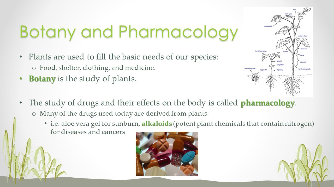 Botany and Pharmacology