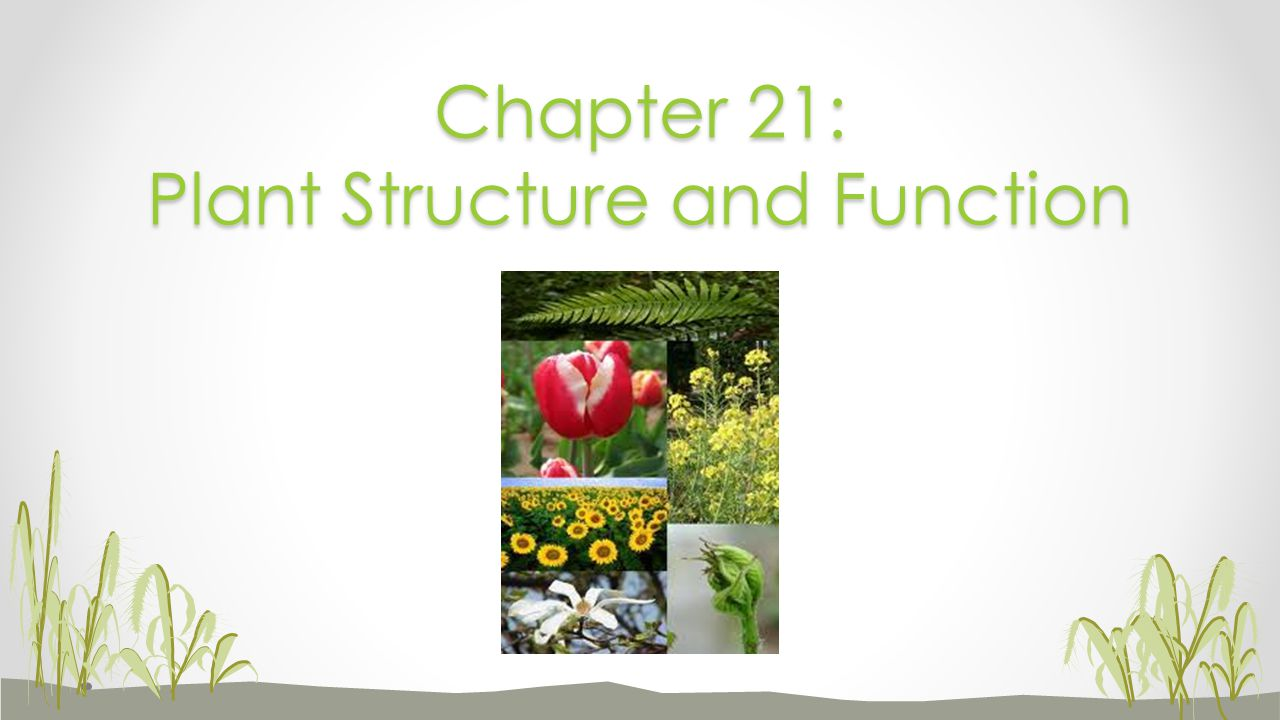 Chapter 21: Plant Structure and Function