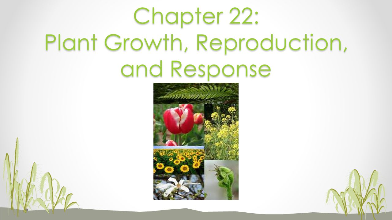 Chapter 22: Plant Growth, Reproduction, and Response