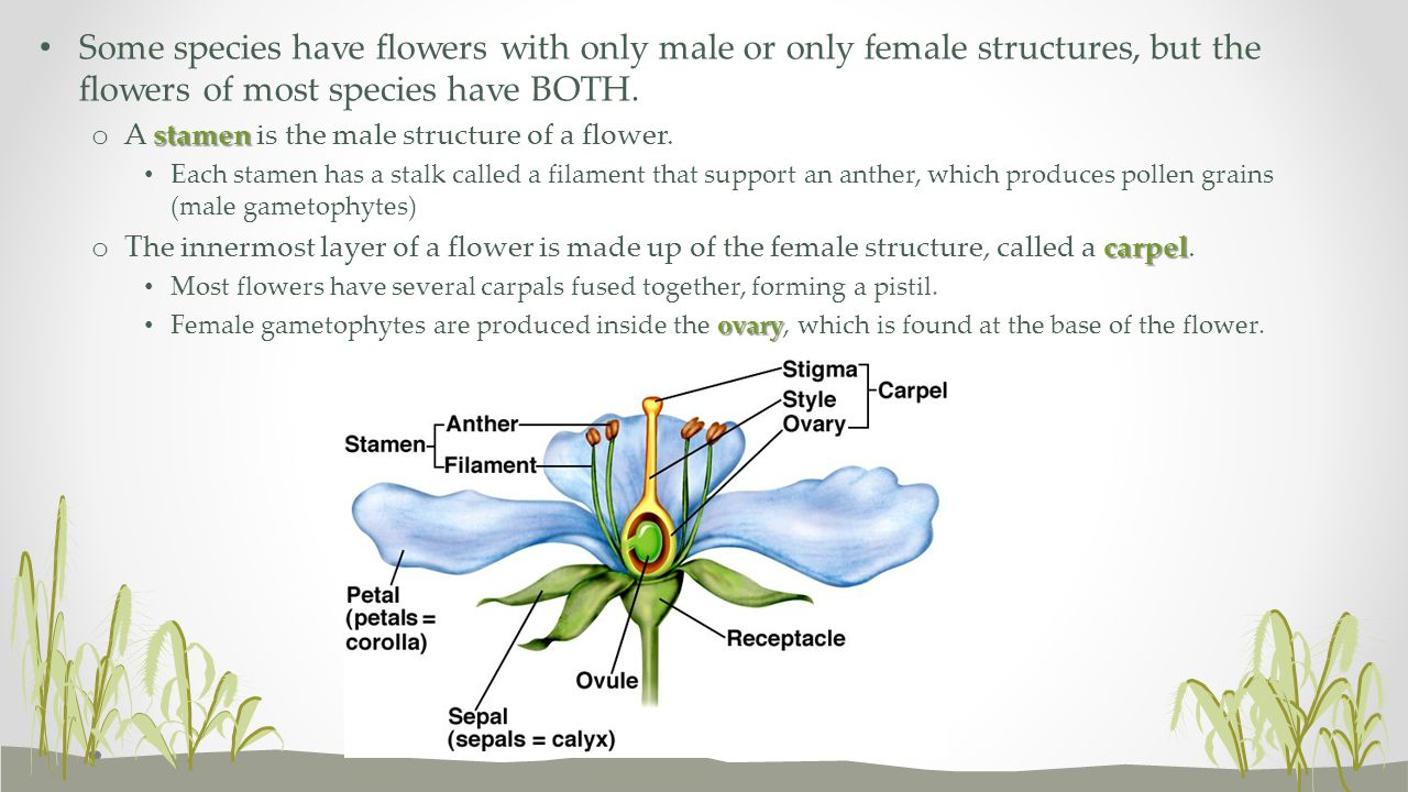Some species have flowers with only male or only female structures, but the flowers of most species have BOTH.