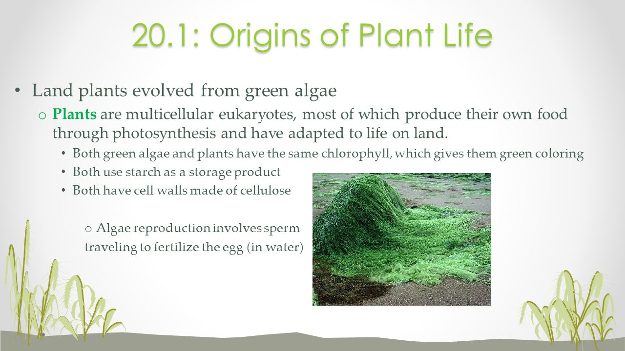 20.1: Origins of Plant Life Land plants evolved from green algae
