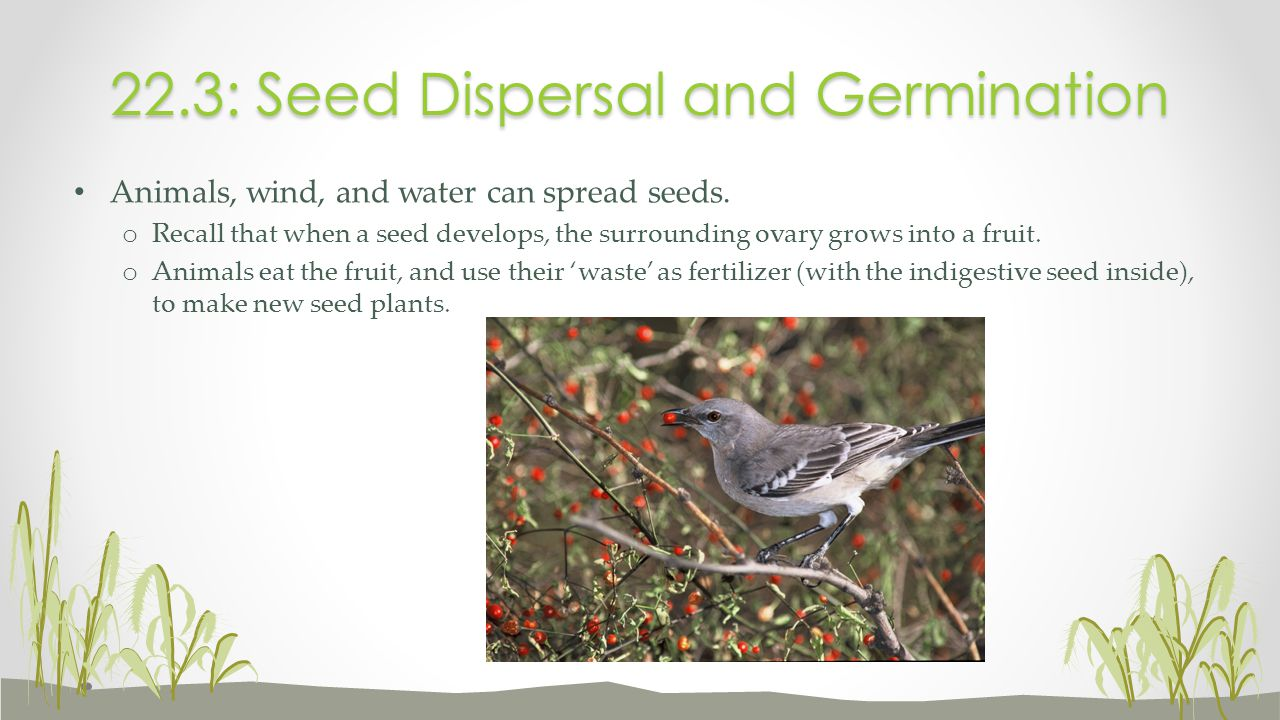 22.3: Seed Dispersal and Germination