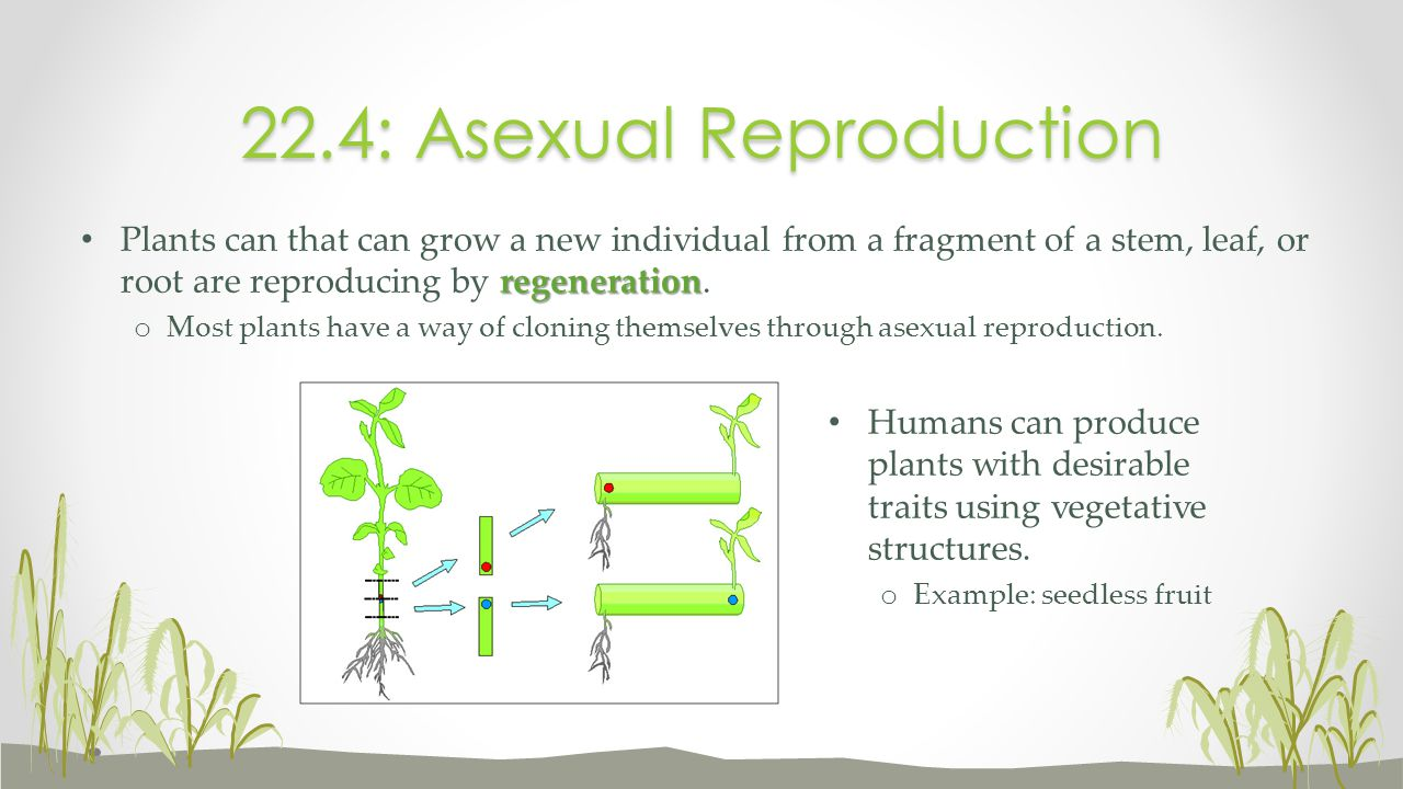 22.4: Asexual Reproduction