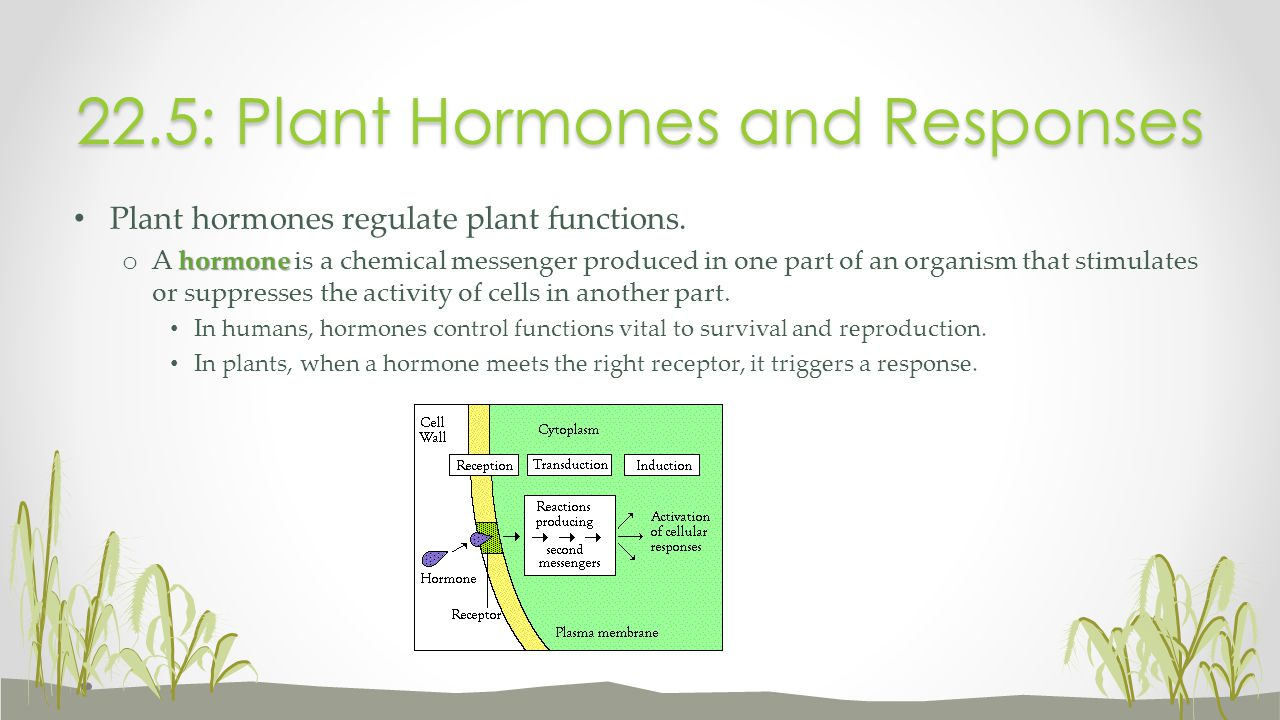22.5: Plant Hormones and Responses