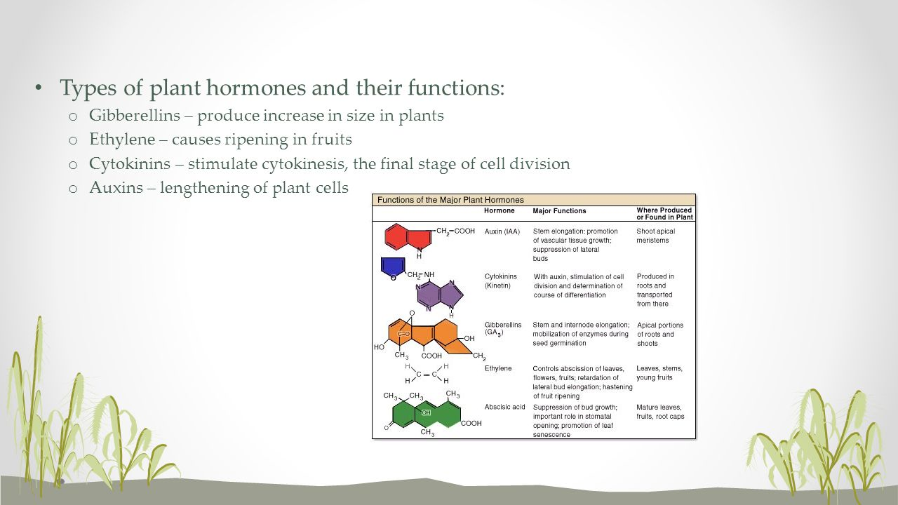 Types of plant hormones and their functions: