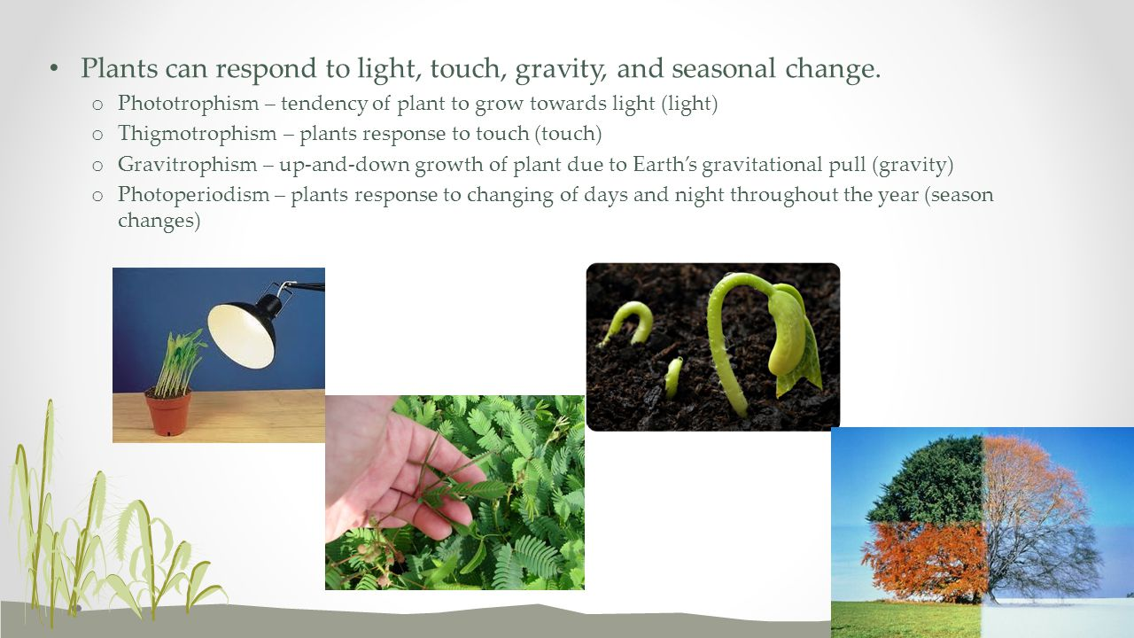 Plants can respond to light, touch, gravity, and seasonal change.
