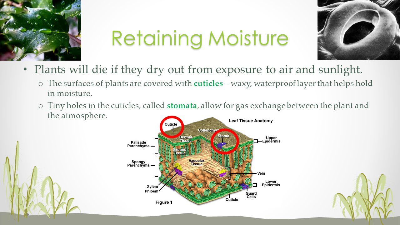 Retaining Moisture Plants will die if they dry out from exposure to air and sunlight.