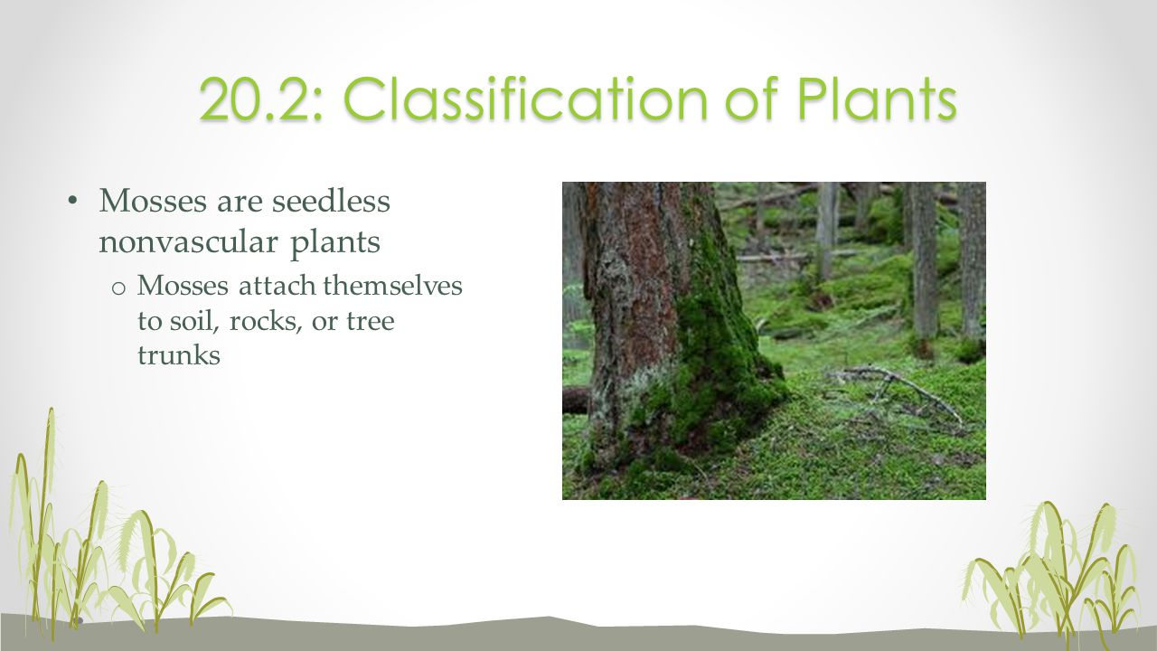 20.2: Classification of Plants
