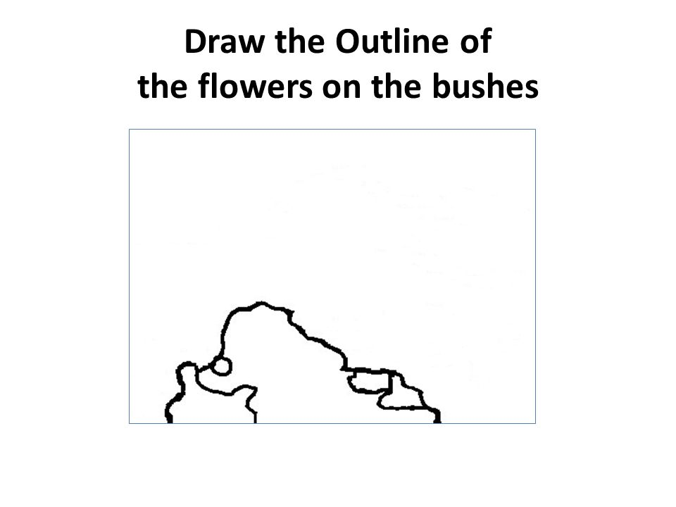 Draw the Outline of the flowers on the bushes