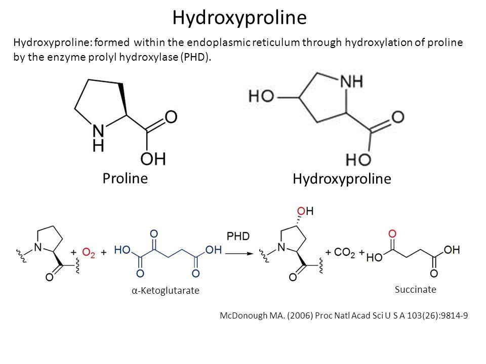 Hydroxyproline Proline Hydroxyproline
