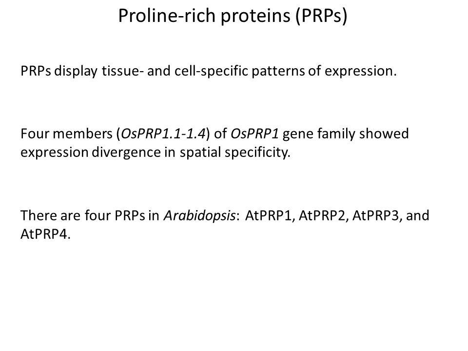 Proline-rich proteins (PRPs)
