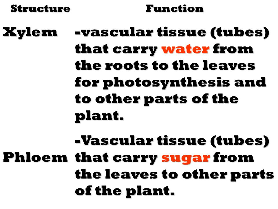 Structure Xylem. Phloem. Function.