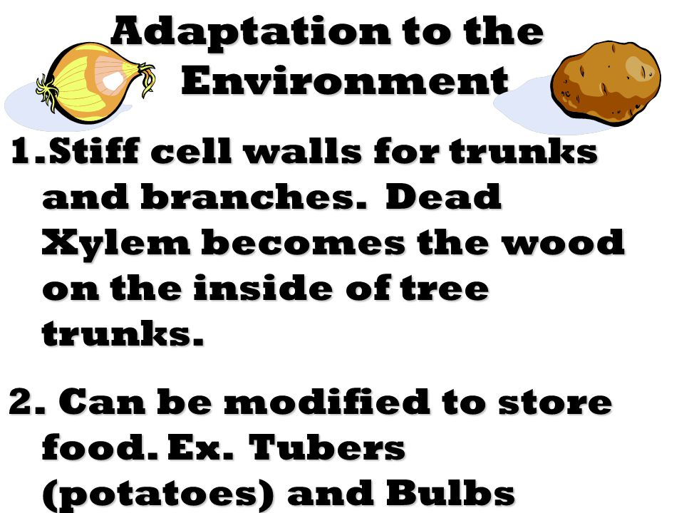 Adaptation to the Environment