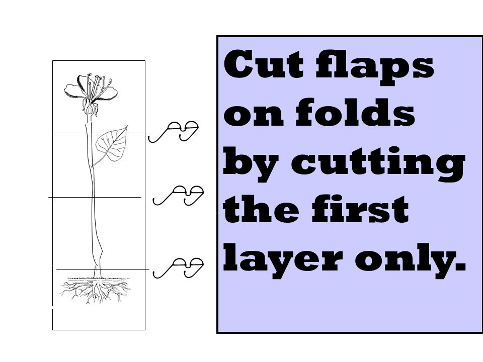 Cut flaps on folds by cutting the first layer only.
