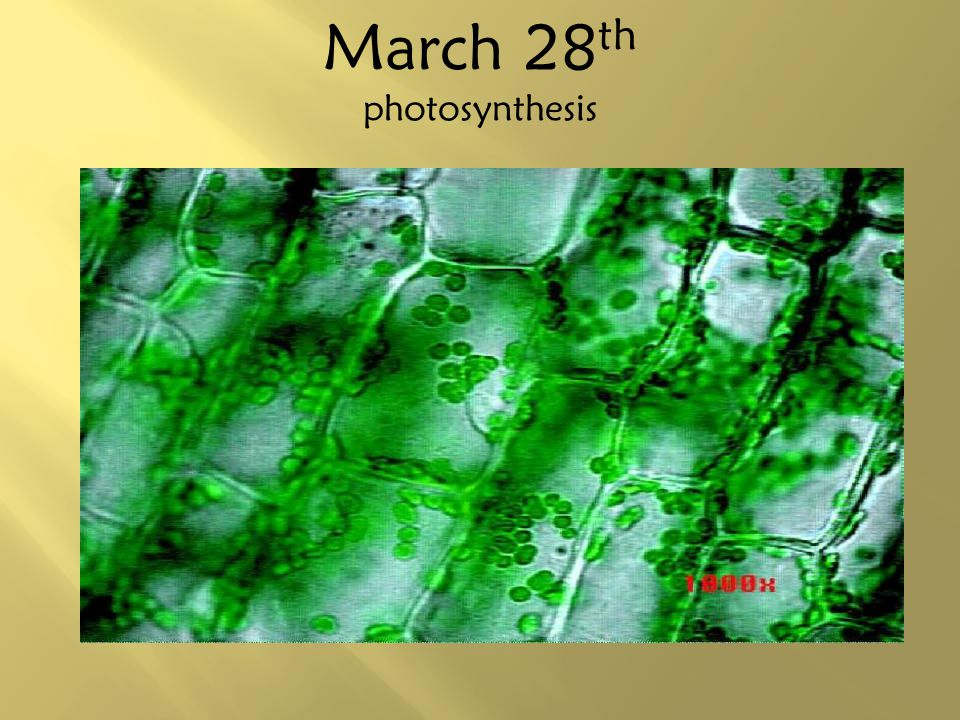 March 28th photosynthesis