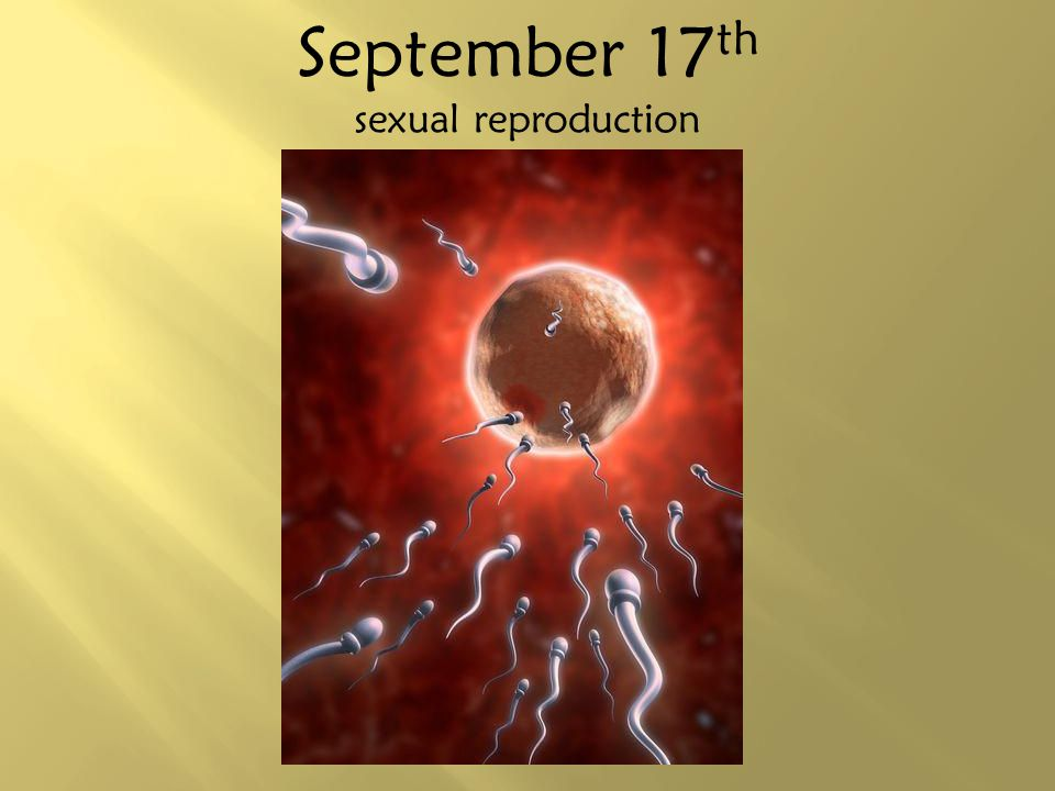 September 17th sexual reproduction