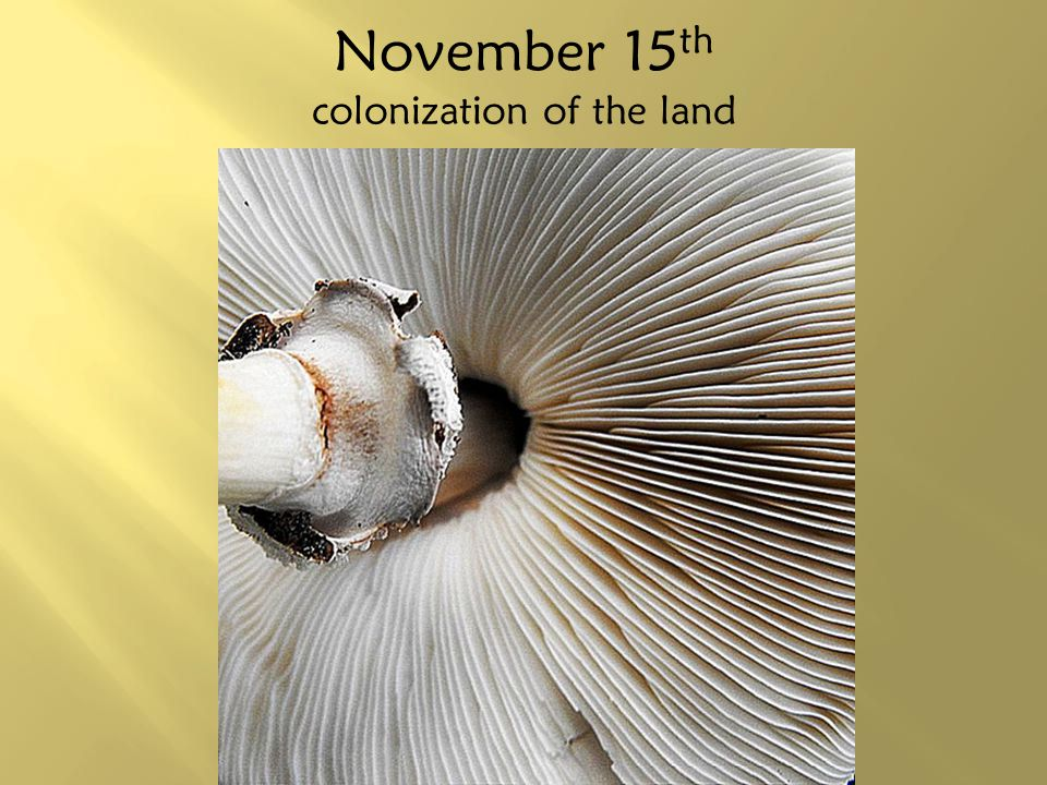 November 15th colonization of the land