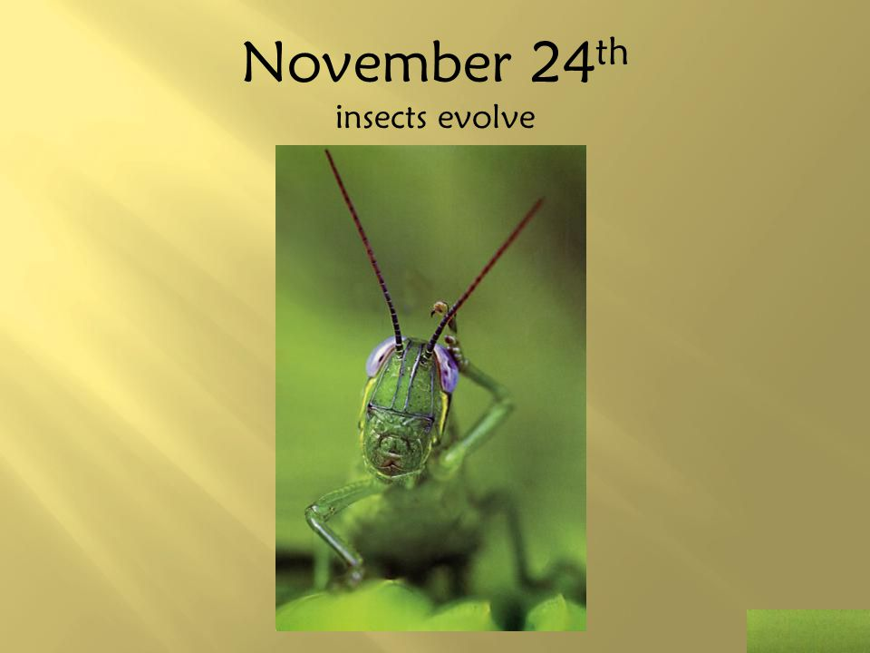 November 24th insects evolve