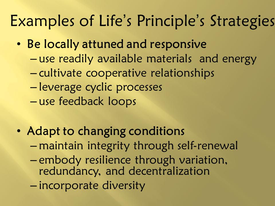 Examples of Life's Principle's Strategies