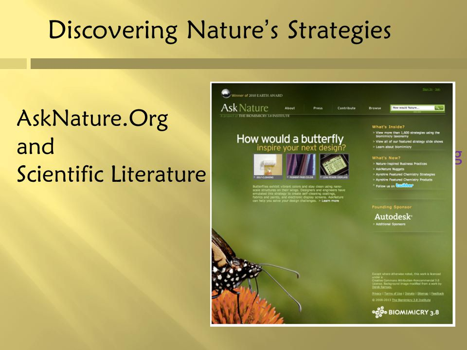 Discovering Nature's Strategies