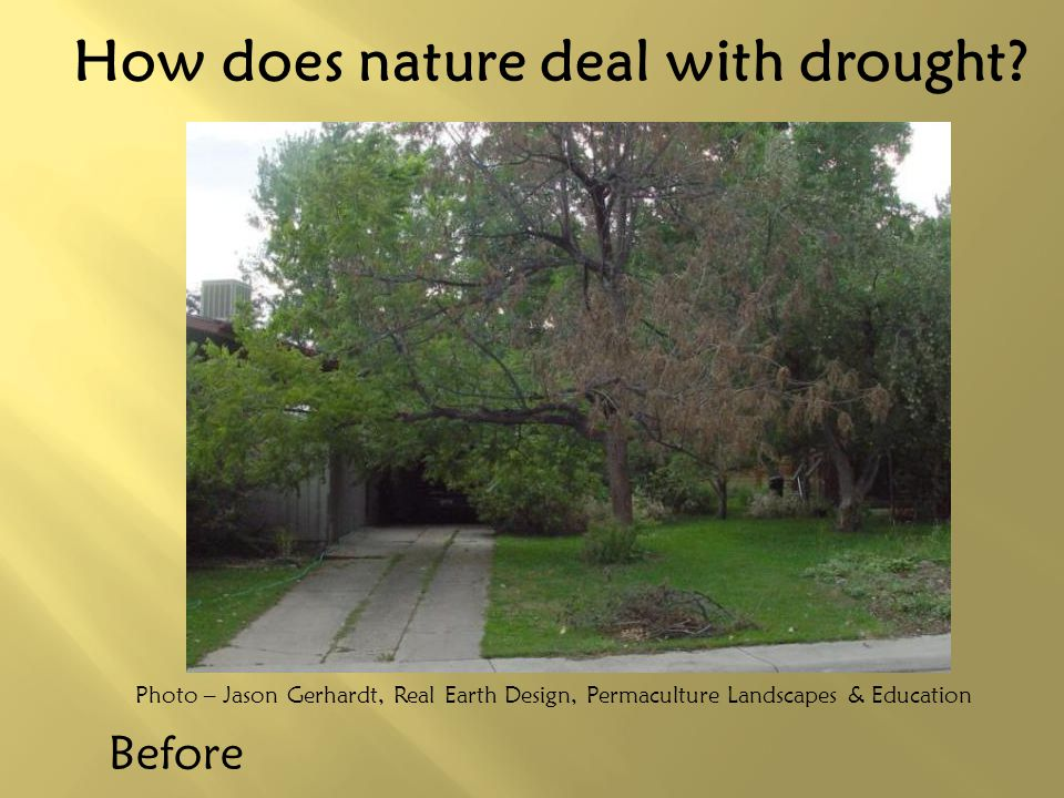 How does nature deal with drought