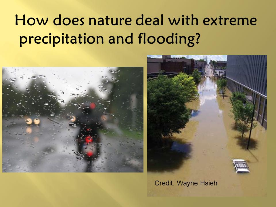 How does nature deal with extreme precipitation and flooding