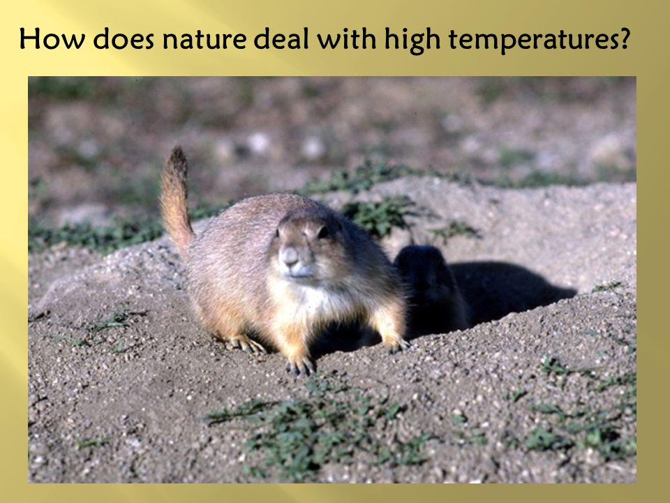 How does nature deal with high temperatures