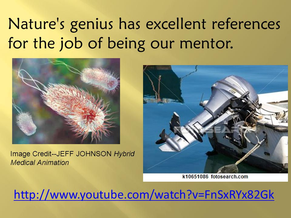 Nature s genius has excellent references for the job of being our mentor.