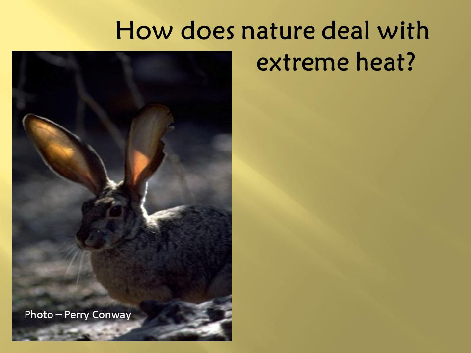 How does nature deal with extreme heat
