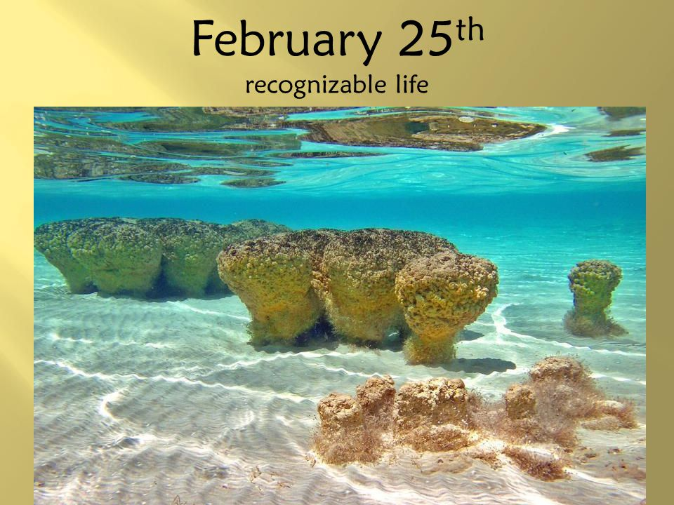 February 25th recognizable life