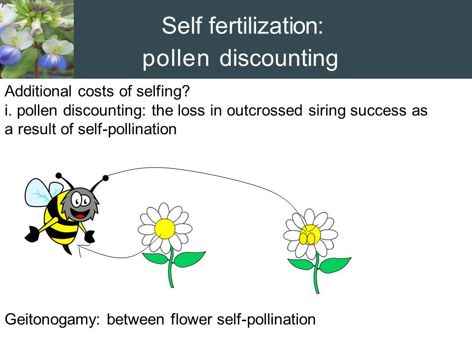 Self fertilization: pollen discounting Additional costs of selfing