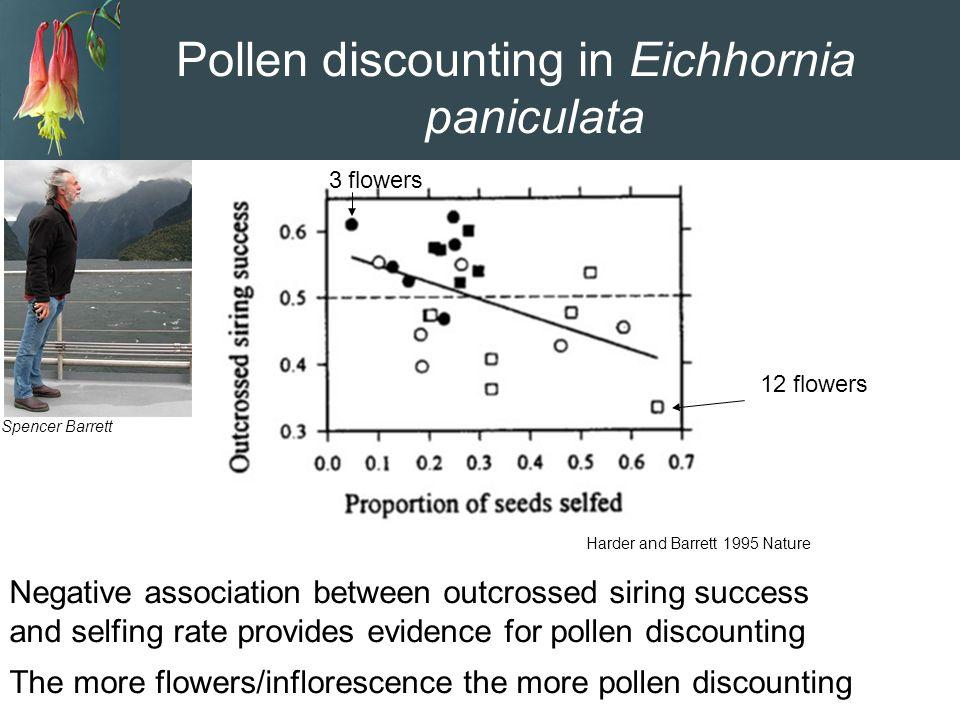 Pollen discounting in Eichhornia paniculata