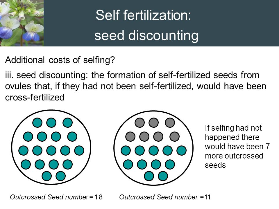 Self fertilization: seed discounting Additional costs of selfing