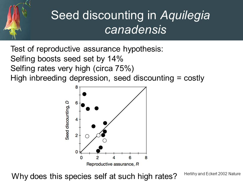 Seed discounting in Aquilegia canadensis